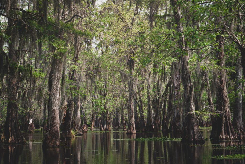 swamp wetland and upland management algae and aquatic weed control invasive species mosquito breeding ground marsh south region florida region - 1